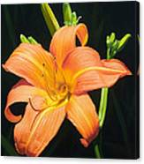 Monikas Orange Lily Canvas Print