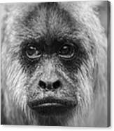 Monkey Eyes Canvas Print