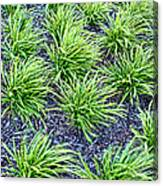 Monkey Grass Abstract Canvas Print