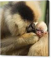 Monkey Mother Canvas Print