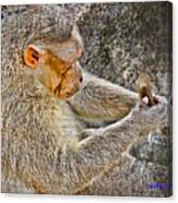 Monkey Playing With Tail Canvas Print