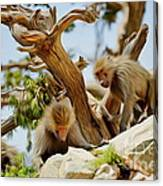 Monkeys On Mountain Canvas Print