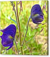 Monkshood On Alpine Tundra Trail At  Eielson Visitor's Center In Denali Np-ak  Canvas Print