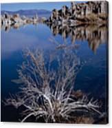 Mono Lake Salt Bush Canvas Print
