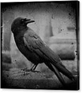 Monochrome Crow Canvas Print