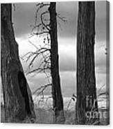 Monochrome Trees Canvas Print