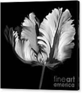 Monocrhome Parrot Tulip Canvas Print