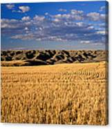 Montana   Field And Hills Canvas Print
