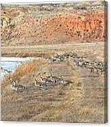 Montana Spring Thaw Canvas Print
