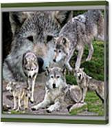 Montana Wolf Pack Canvas Print