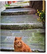 Montepulciano Cat Canvas Print