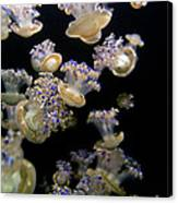 Monterey Aquarium Jellyfish Canvas Print
