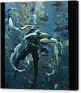 Monterey Bay Aquarium Diver Canvas Print