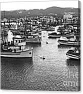 Monterey Harbor Full Of Purse-seiner Fishing Boats California 1945 Canvas Print