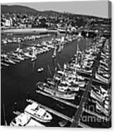 Monterey Marina With Fishing Boats In Slips Sept. 4 1961  Canvas Print