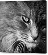 Moody Cat Canvas Print