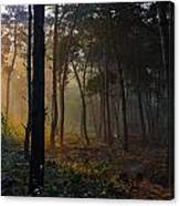Moody Forest Happy Sun Canvas Print