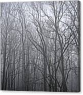 Moody Outlook Canvas Print