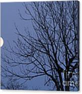 Moon And Bare Tree Canvas Print