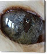 Moon In Cats Eye Canvas Print
