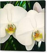 Moon Orchid Pair Canvas Print