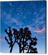 Moon Over Joshua - Joshua Trees During Sunrise In Joshua Tree National Park. Canvas Print