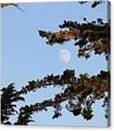 Moon Over Morro Bay Canvas Print