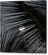 Moon  Through Palm Trees Canvas Print