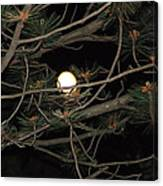 Moon Through Pines Canvas Print