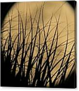 Moon Through The Palms Canvas Print