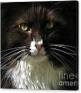 Moonie In Shadow Canvas Print