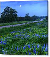 Moonlit Bluebonnets Canvas Print