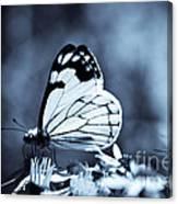 Moonlit Daydream Canvas Print