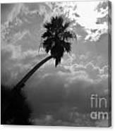 Moonlit Palm Canvas Print