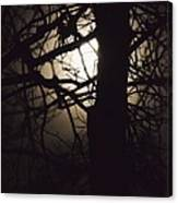 Moonlit Tree In The Forest Canvas Print