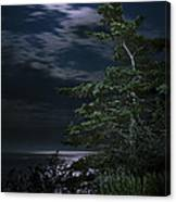Moonlit Treescape Canvas Print