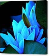 Moonlit Waterlilies Canvas Print