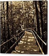 Moores Creek Battlefield Nc Swamp Walk  Canvas Print