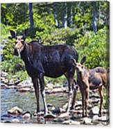 Moose And Baby 4 Canvas Print