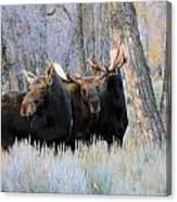 Moose Meeting Canvas Print