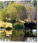 Moose Reflection Canvas Print