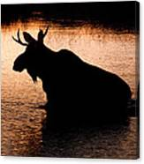 Moose Silhouette 3569   Canvas Print