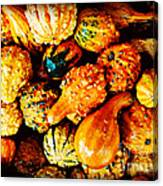 More Beautiful Gourds - Heralds Of Fall Canvas Print
