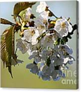 More Spring Flowers Canvas Print