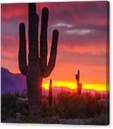 Morning Arizona Style  Canvas Print