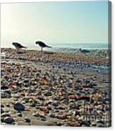 Morning Beach Preen Canvas Print