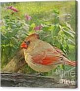 Morning Cardinal Canvas Print