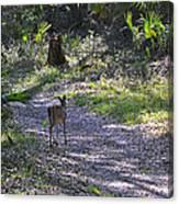 Morning Deer Canvas Print