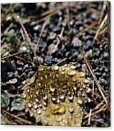 Morning Dew On Autumn Leaf Canvas Print