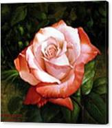 Morning Dew On The Rose Faded Canvas Print